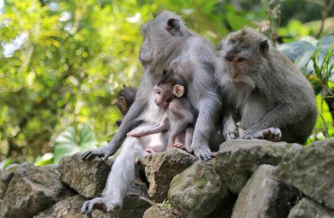 Ubud Monkey Forest Awaits You