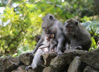 Monkey Forest Ubud Menanti Anda
