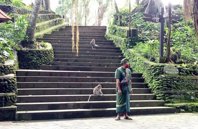 Monyet Masuk Hotel Bisa Jadi Tontonan Menarik