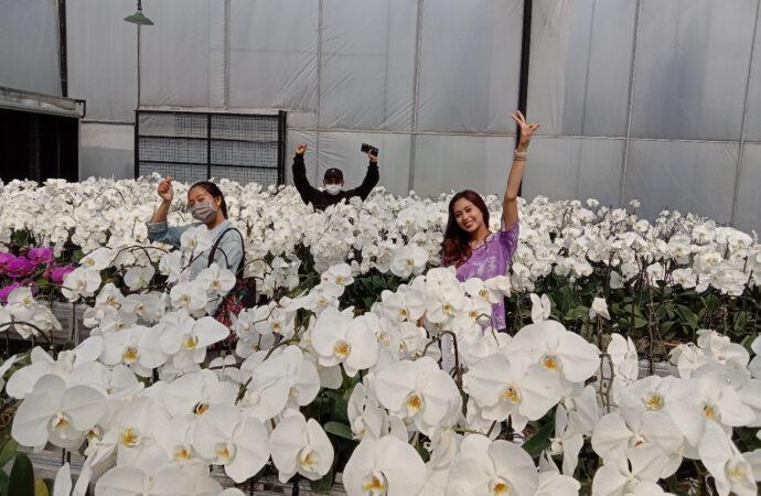 Menyejukkan Mata dan Pikiran di Duta Orchid Garden