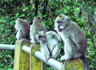 In Wanagiri Monkey Forest, You Can Do This