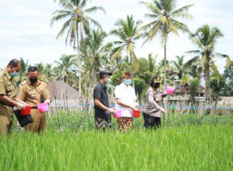 Petani di Badung Dibantu Benih Padi Inbrida dan Cabe
