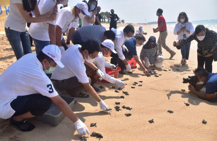 Tanam Terumbu Karang dan Lepas Tukik di Pantai Nusa Dua