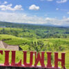 Jatiluwih Tourist Attraction Hungers for You