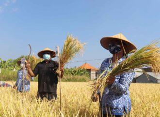 Ini Cara Peningkatan Produksi Pertanian di Buleleng