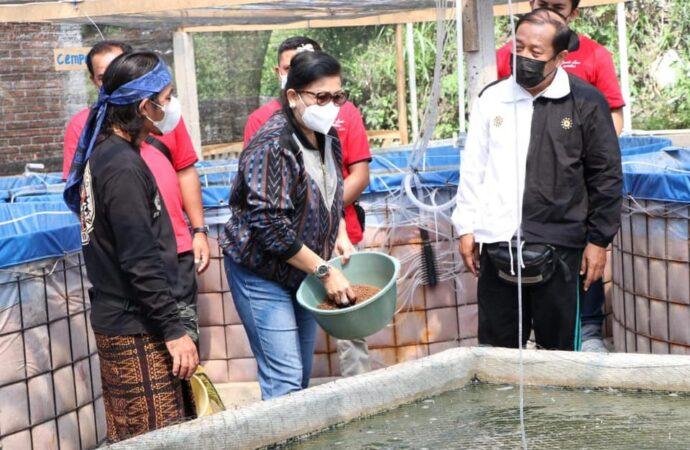 Sistem Bioflok Cocok untuk Budidaya Ikan di Bali. Ini Alasannya