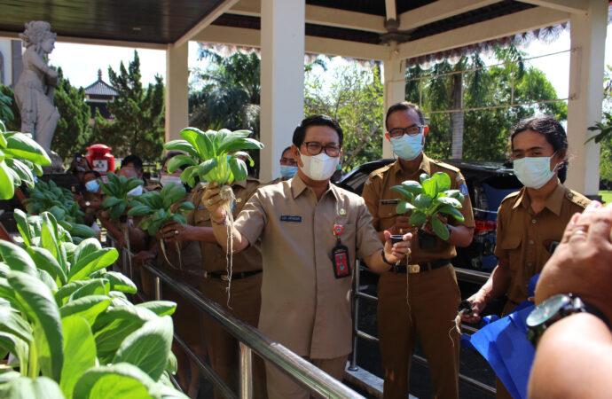 Panen Perdana Sayur Hidroponik di Kantor Dinas Pertanian dan Pangan