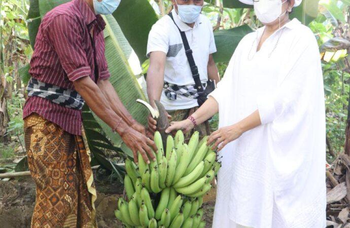 Putri Koster: Manfaatkan Potensi di Lingkungan Desa