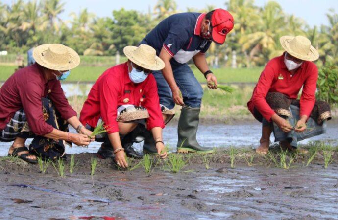 Tabanan Majukan Pembangunan di Sektor Pertanian