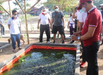 Menanam  Cemara Udang di Pesisir Timur Pantai Tanjung Benoa
