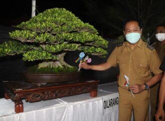 Kontes dan Pameran Bonsai di Pecatu