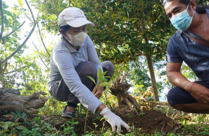 Nikmati Pesona Alam Bukit Tengah sambil Tanam Pohon