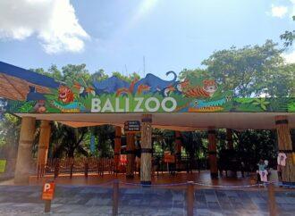 Bali Zoo Tetap Berkomitmen Terapkan Prokes