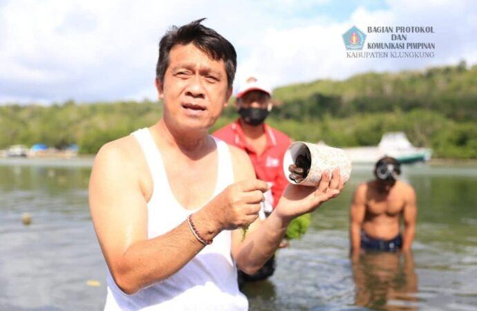 Abalon, Seafood Favorit di Nusa Penida. Sudah Pernah Nyoba?