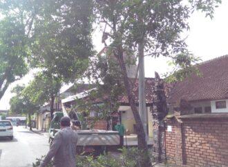 Kota Denpasar Antisipasi Pohon Tumbang
